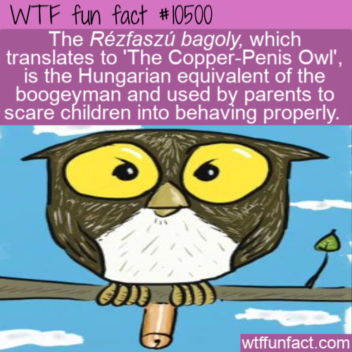 WTF Fun Fact - Rézfaszú bagoly