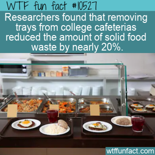 WTF Fun Fact - Reduce Food Waste In Cafeteria
