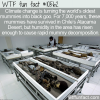 WTF Fun Fact – Mummy Goo
