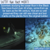 WTF Fun Fact – Black Sea Shipwrecks