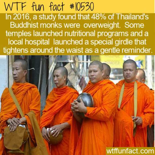 WTF Fun Fact - Thailands Monks On A Diet