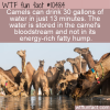 WTF Fun Fact – Camel's Empty Hump