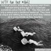 WTF Fun Fact – Japanese Ama