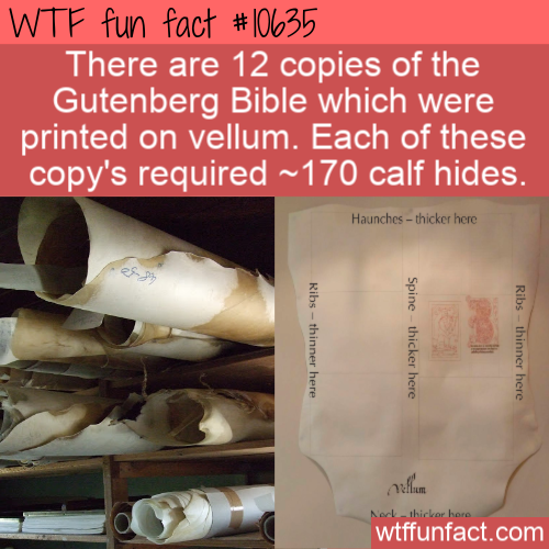 WTF Fun Fact - Bible Vellum