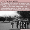 WTF Fun Fact – Gun Salute Origin