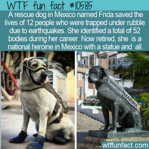 WTF Fun Fact - Frida The Rescue Dog