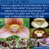WTF Fun Fact – A Monkey Faced Orchid Named Dracula