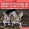 WTF Fun Fact – Nonemitic Rats