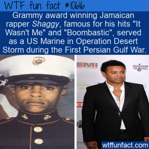 WTF Fun Fact - Shaggy Went To War
