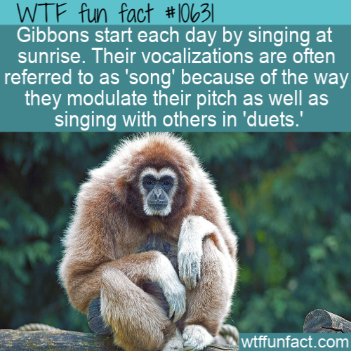 WTF Fun Fact - Sunrise Song