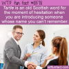 WTF Fun Fact – Tartle