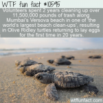 WTF Fun Fact - Trash Cleanup Brings Olive Ridley Hatchlings