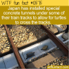 WTF Fun Fact – How Did The Turtle Cross The Tracks?