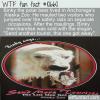 WTF Fun Fact – Binky The Polar Bear