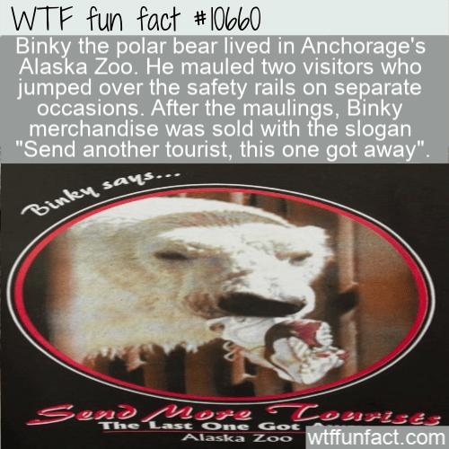 WTF Fun Fact - Binky Polar Bear