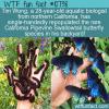 WTF Fun Fact – California Pipevine Swallowtail