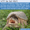 WTF Fun Fact – Snapping Turtles Bite