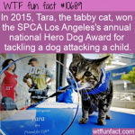 WTF Fun Fact - Hero Dog Cat Award