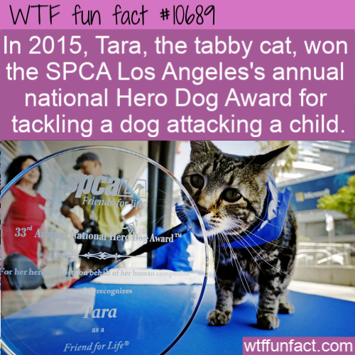 WTF Fun Fact - Hero Dog Cat Award