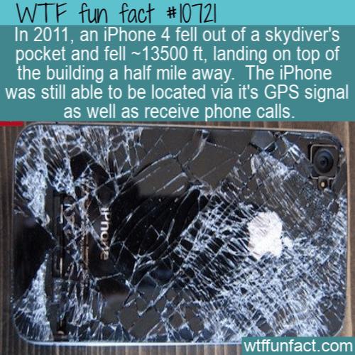WTF Fun Fact - Iphone 4 fall