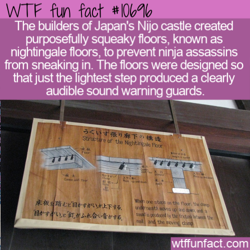 WTF Fun Fact - Nightingale FLoors