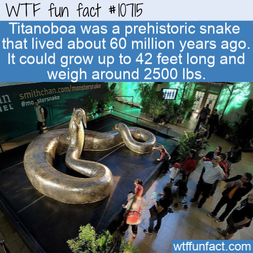 WTF Fun Fact - Oldest Giant Titanoboa