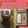WTF Fun Fact – Bonaparte's Part