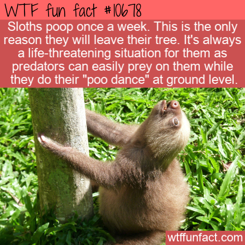 WTF Fun Fact - Sloth Dooty