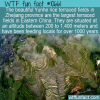 WTF Fun Fact – Beautiful Terraces