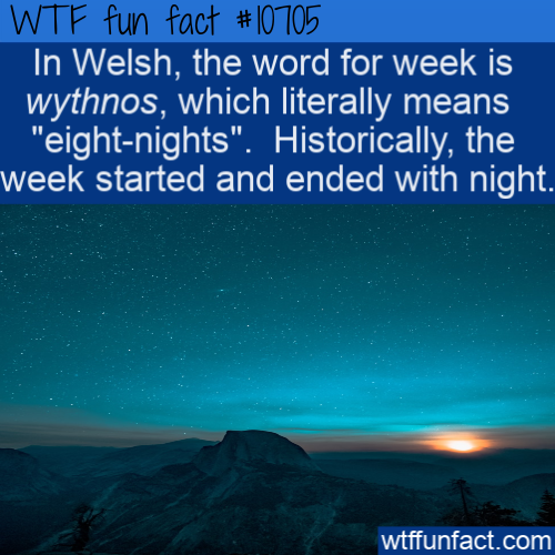 WTF Fun Fact - Wythnos eight-nights