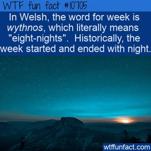 WTF Fun Fact - Wythnos eight-nights