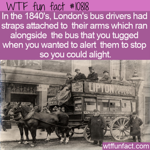 WTF Fun Fact - 1840s London Bus Stop