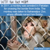 WTF Fun Fact – Monkey Arrested