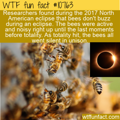 WTF Fun Fact - Bees Stopped Buzzing