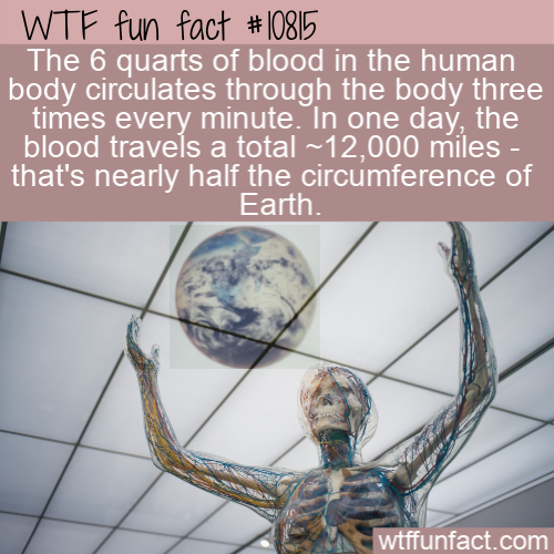 WTF Fun Fact - Blood Travels 12000 miles