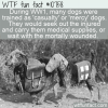 WTF Fun Fact – Casualty/Mercy Dog