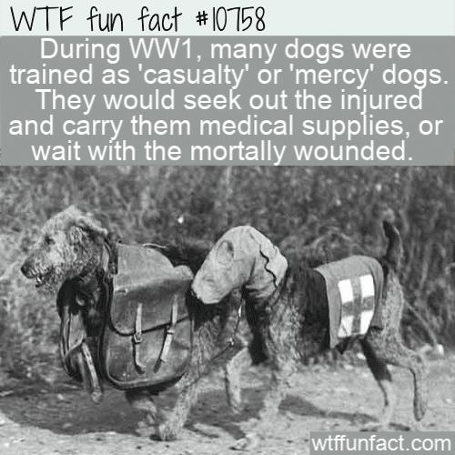 WTF Fun Fact - Casualty Dog
