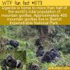 WTF Fun Fact – Mountain Gorillas