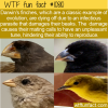 WTF Fun Fact – Darwin Finches Failing To Evolve