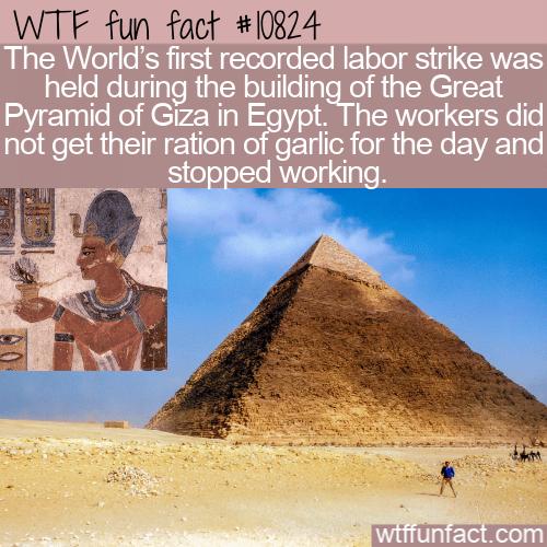 WTF Fun Fact - Egypt Labor Strike