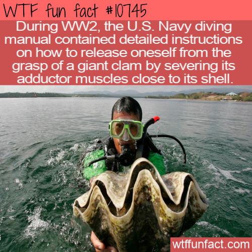 WTF Fun Fact - Giant Killer Clam