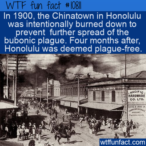 WTF Fun Fact - Honolulu Chinatown