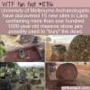 WTF Fun Fact – Jars For The Dead