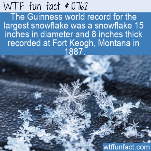 WTF Fun Fact - Largest Snowflake