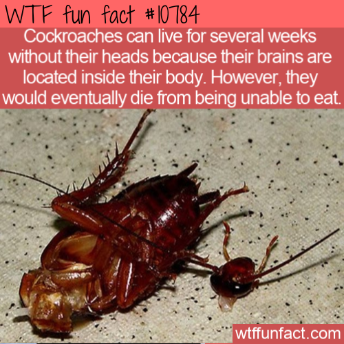 WTF Fun Fact - Live Without Head