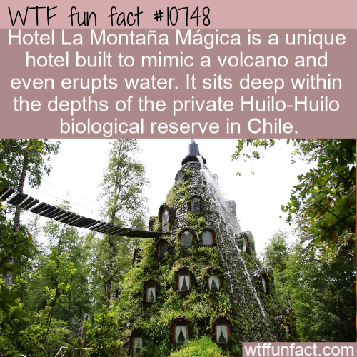 WTF Fun Fact - Hotel Montana Magica