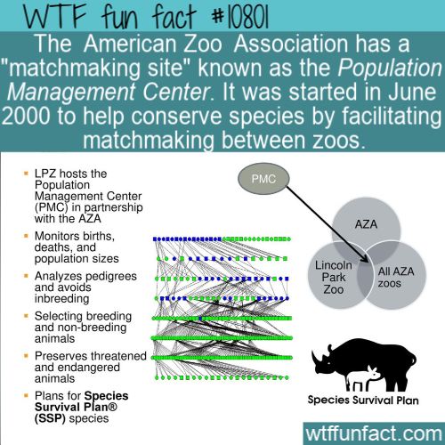 WTF Fun Fact - Population Management Center