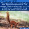 WTF Fun Fact – Squirrels Fake It