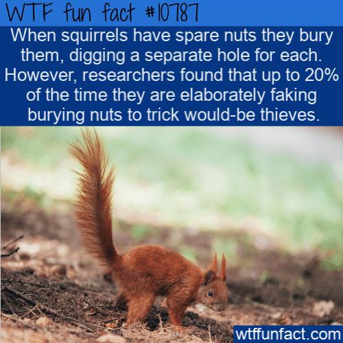 WTF Fun Fact - Squirrels Fake It