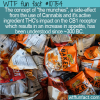 WTF Fun Fact – The Munchies